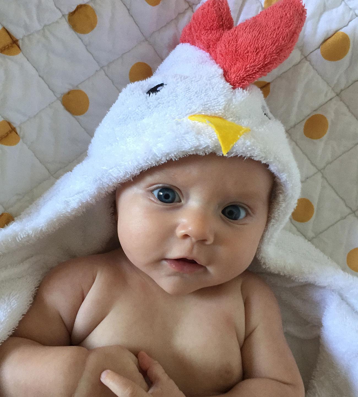 Chicken-Towel
