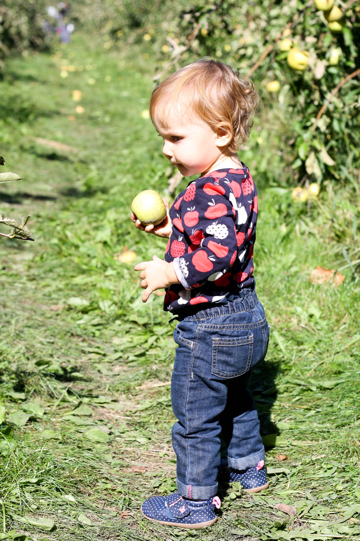 apple-orchard-day-9