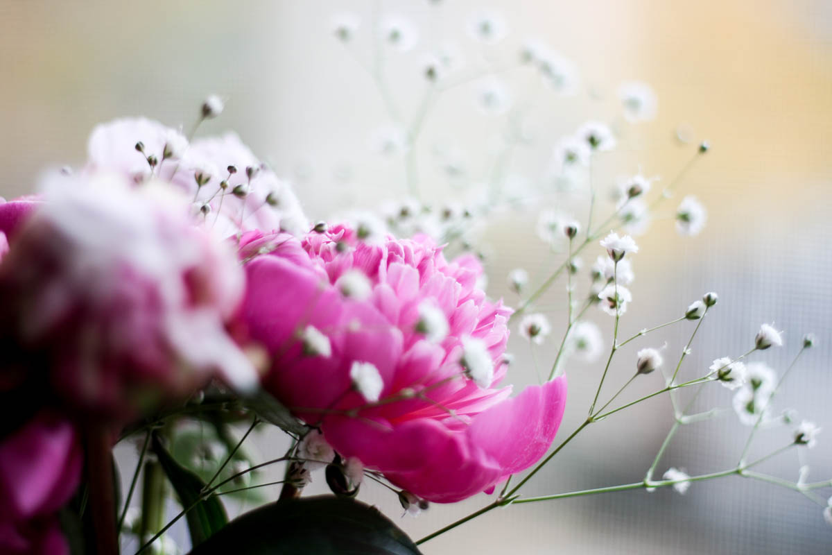 photo-of-peony-flowers_peonies