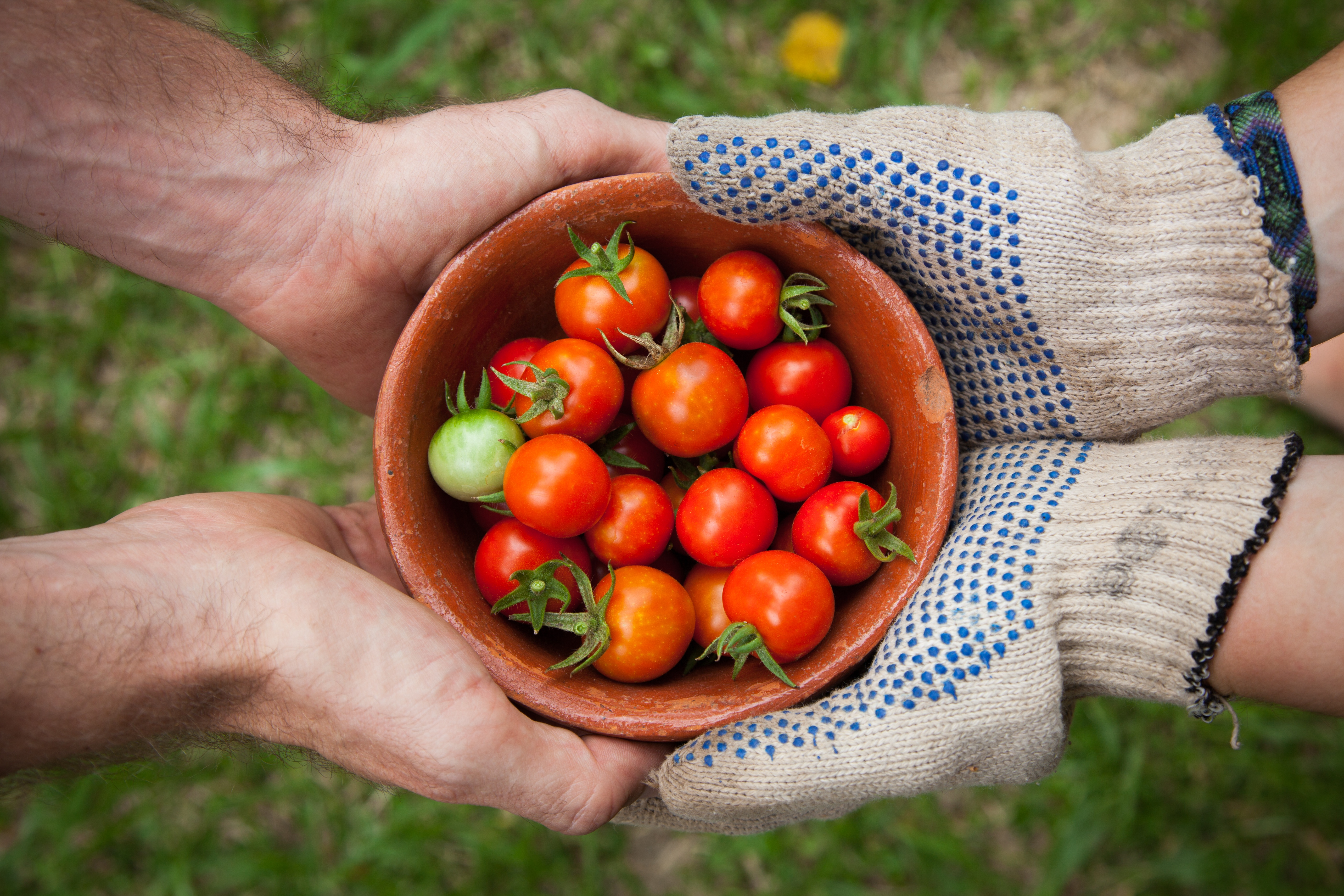 sharing-tomatoes_importance-of-being-involved_elaine-casap